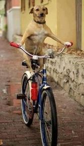 Dogs Bikes Spring Lake Police Department